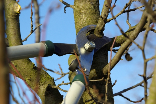 A Step by Step Tree Pruning Guide for Beginners